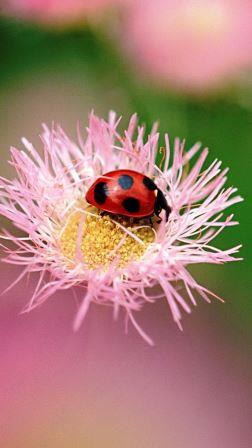 8ca1b024094502cd8ab1508e6be6e49c--hey-ladybug-photography-flowers